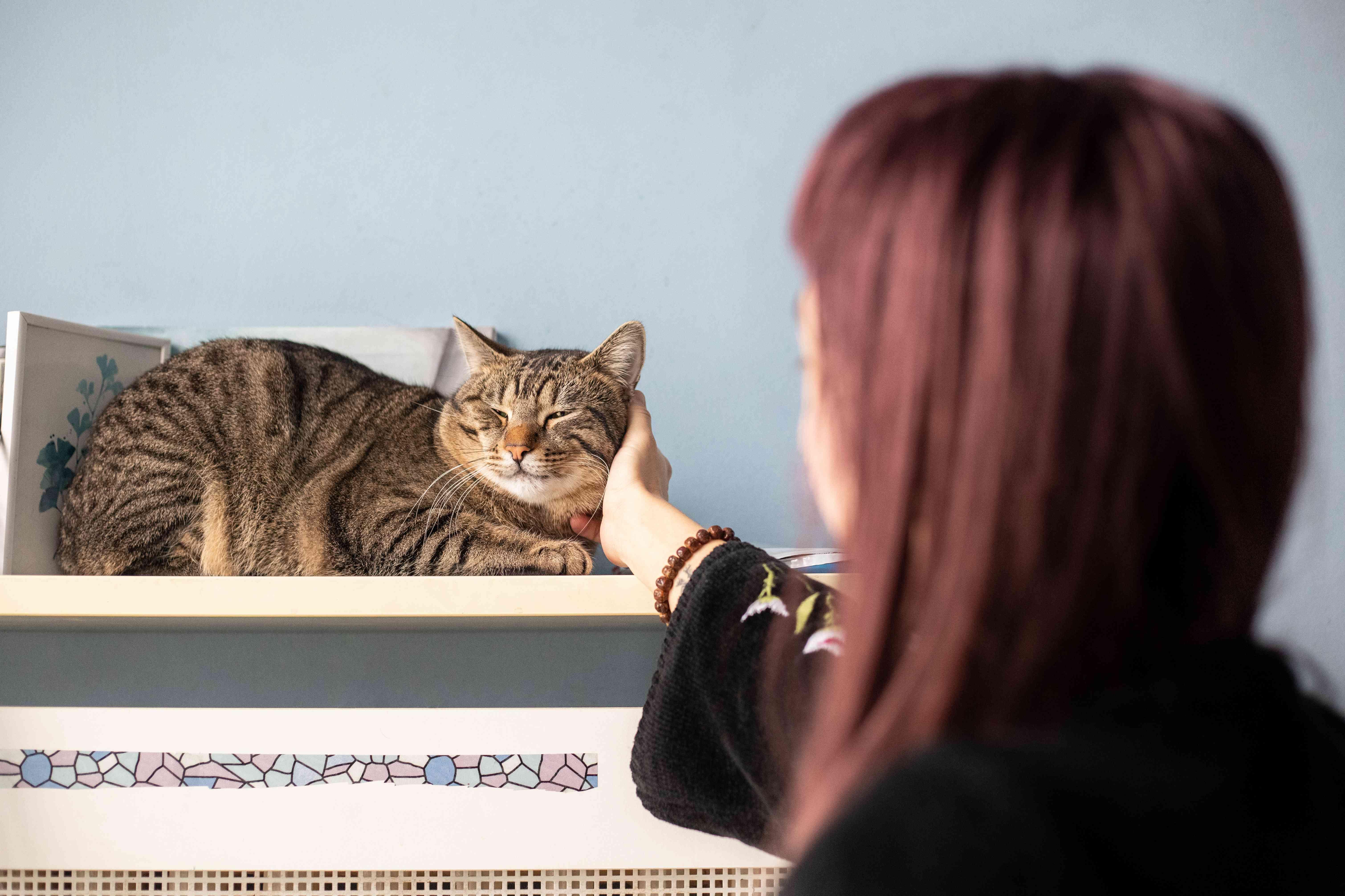 women in foreground scratches kitty cheek on bookshelf