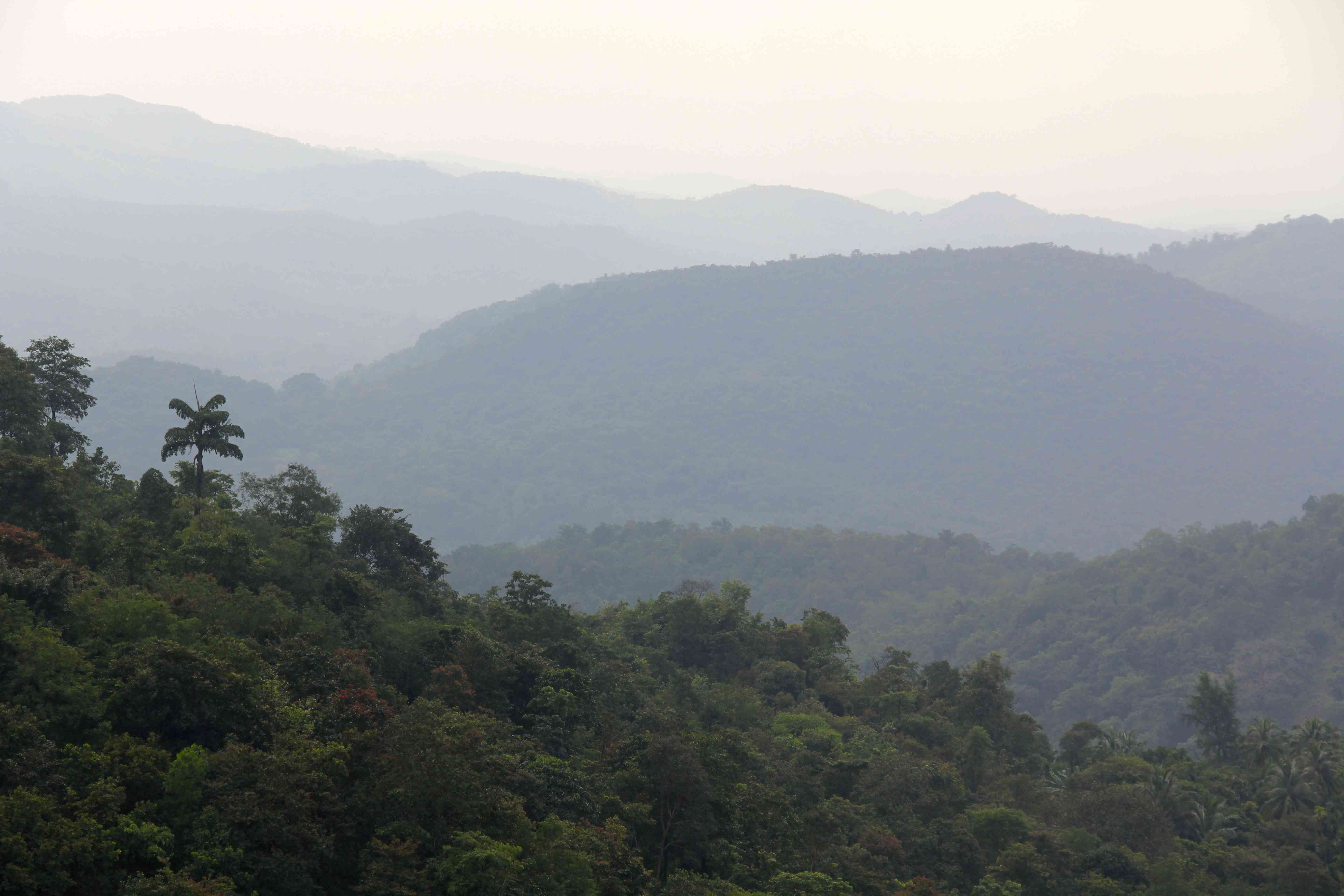 Forest and mountains in the Sawantwadi-Dodamarg wildlife corridor