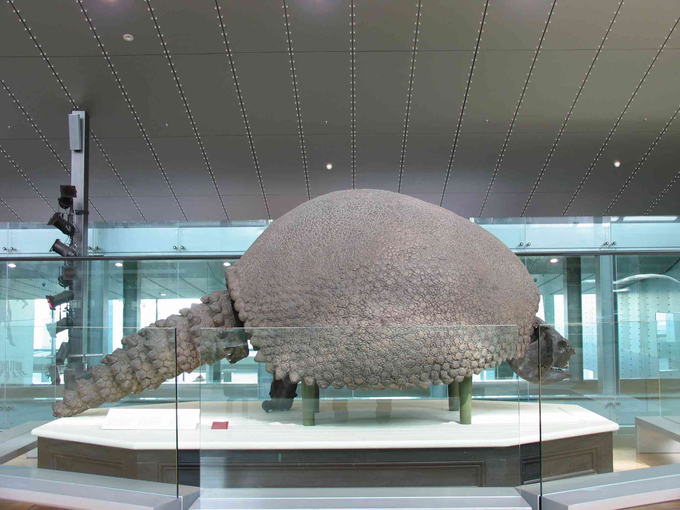 Giant prehistoric armadillo fossil with spiked tail on a platform in a museum