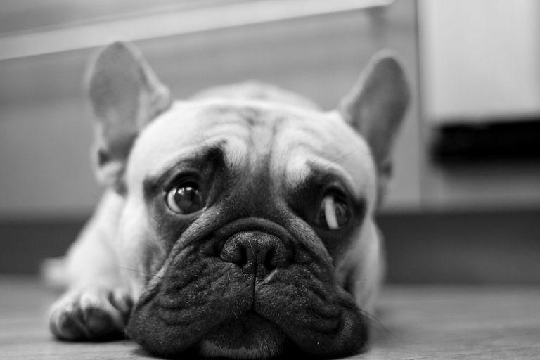 ¿Por qué mi perro adulto va de repente al baño de la casa?