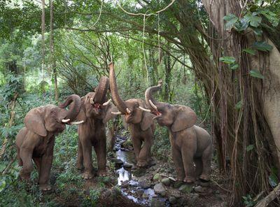 Elephants in a rainforest