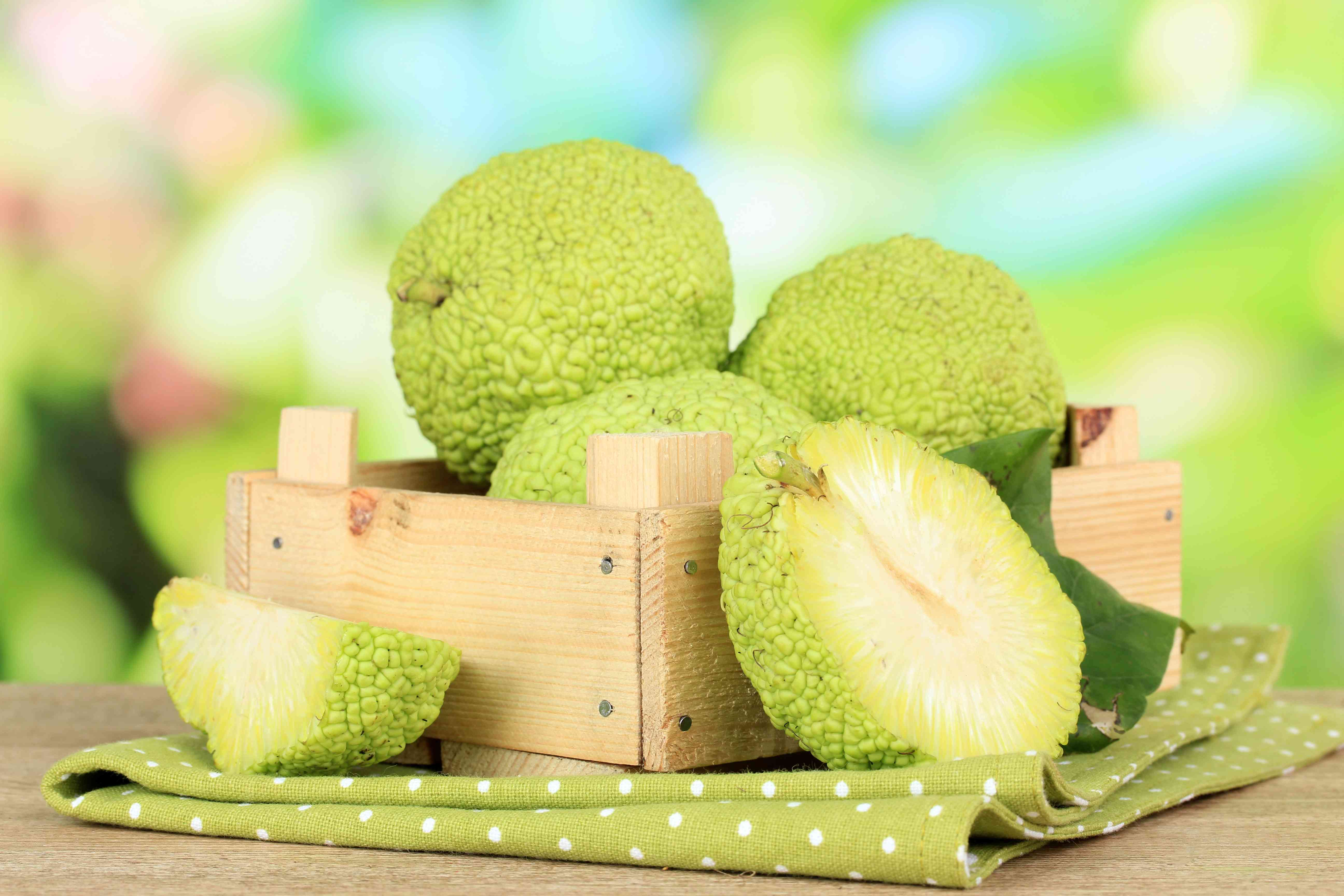 Osage oranges in a crate.
