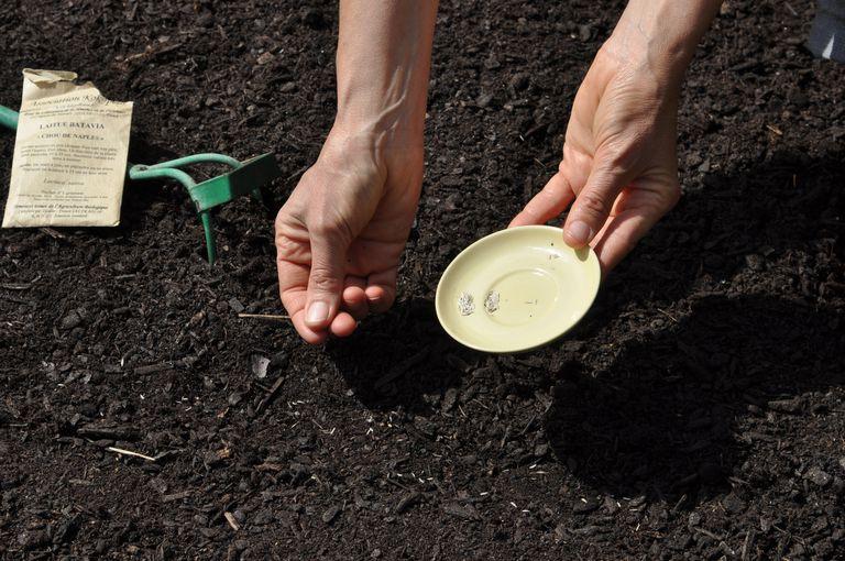 Proveedores de semillas y catálogos de semillas para la pequeña agricultura