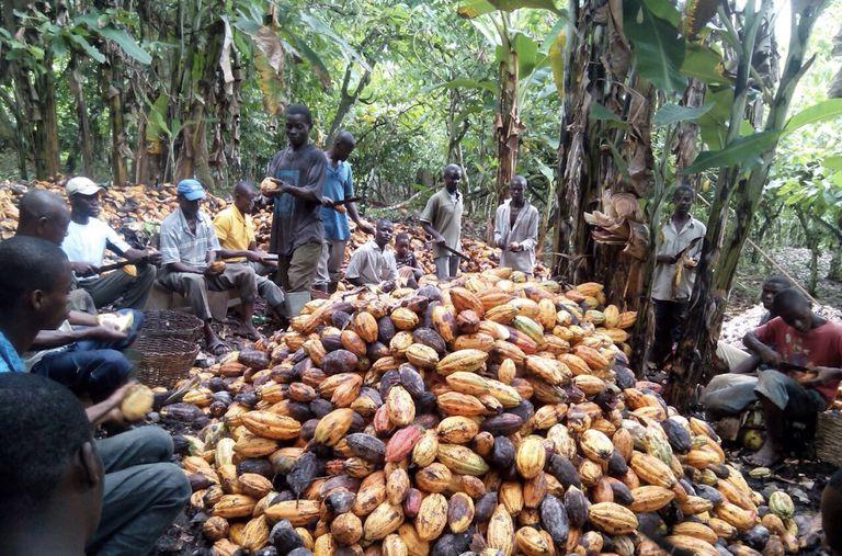 El comercio justo se queda corto cuando se trata de trabajadores agrícolas contratados