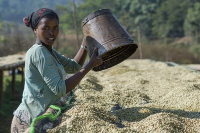 farmer with white coffee beans in Ethiopia