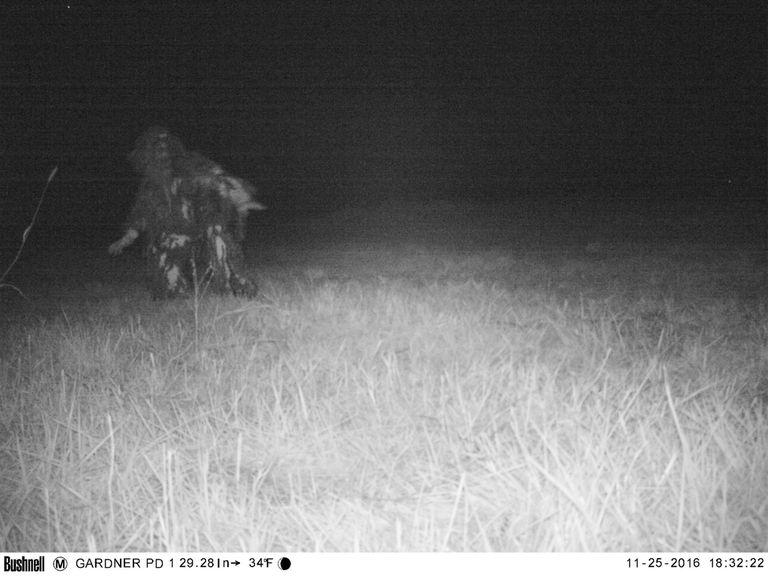 Wildlife camera capture of wildlife in a field