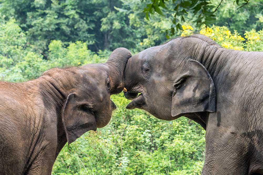 elephants socializing