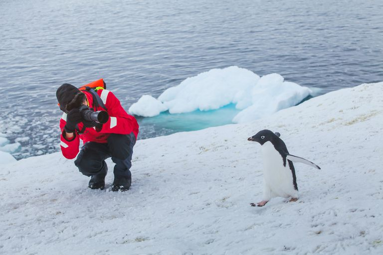 A person taking a picture of a penguin