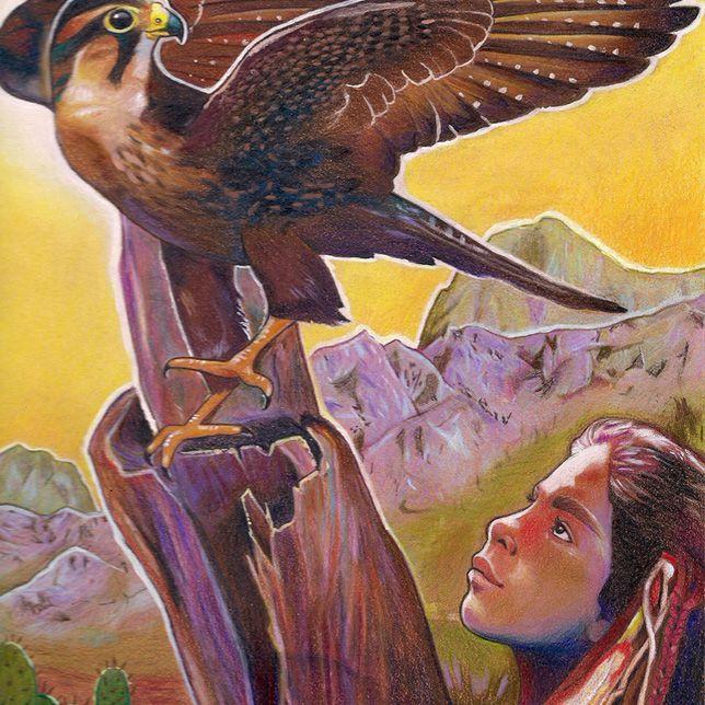Northern aplomato falcon