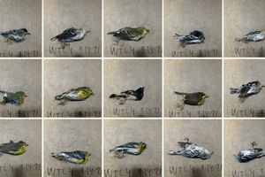 A selection of birds being documented.