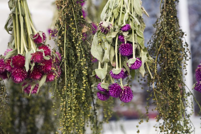 Dried flowers hanging upside down