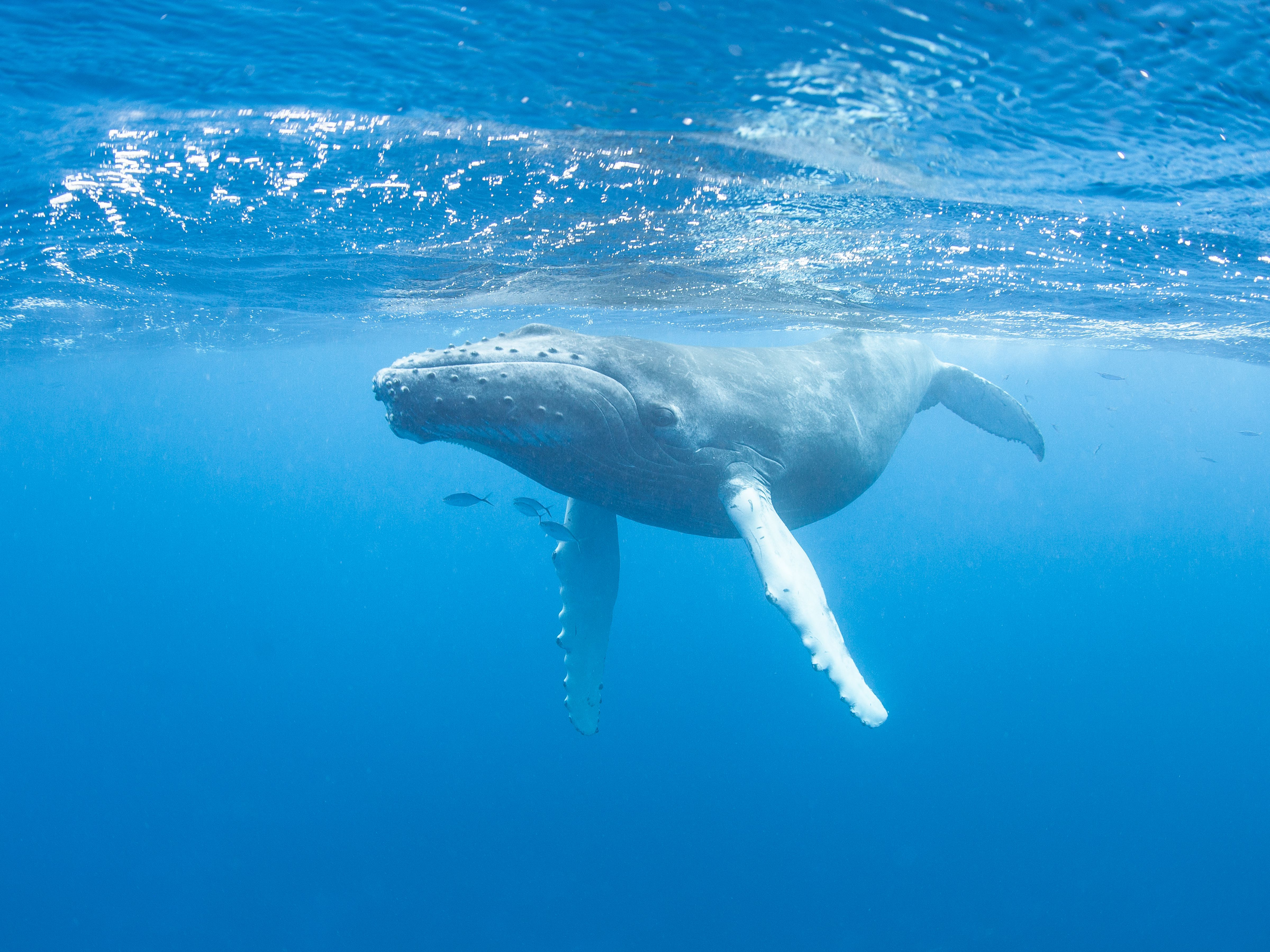 7 Haunting Songs Sung By Whales