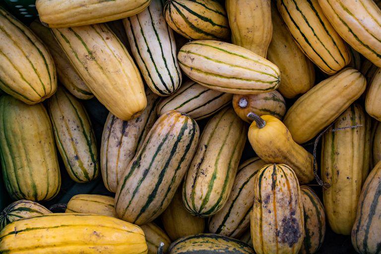 overhead shot of organic squash produce
