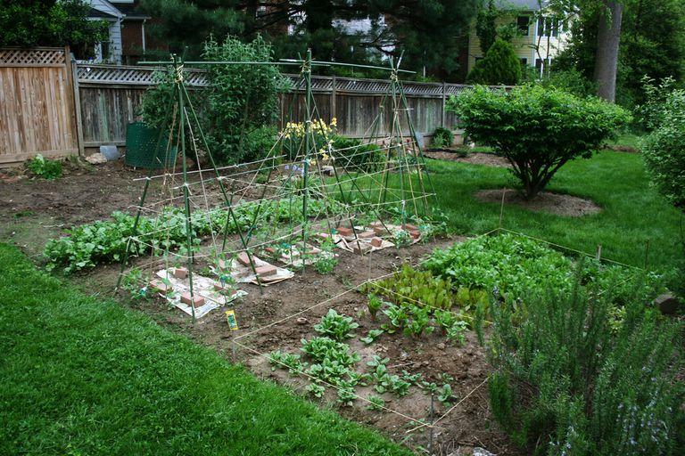 Mi patio es tu patio: Vecinos desmantelan vallas a favor del espacio compartido