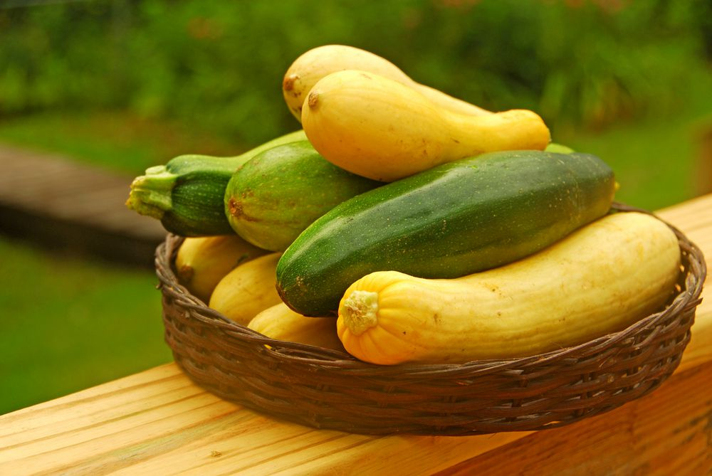 zucchini and summer squash arranged together