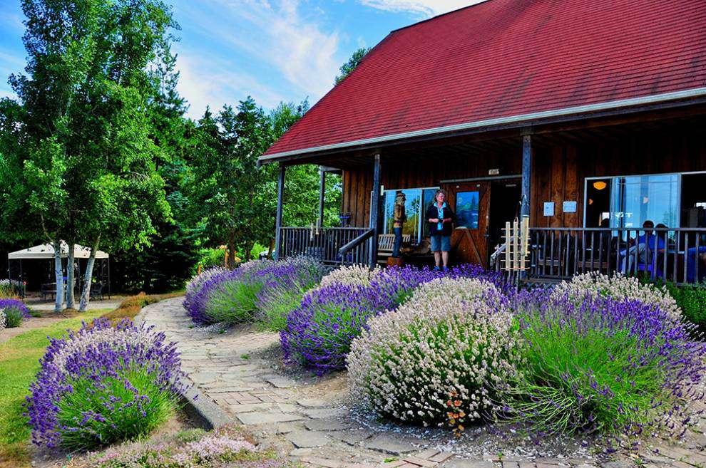 Lavender Capital of North America: Purple Haze farm gift shop