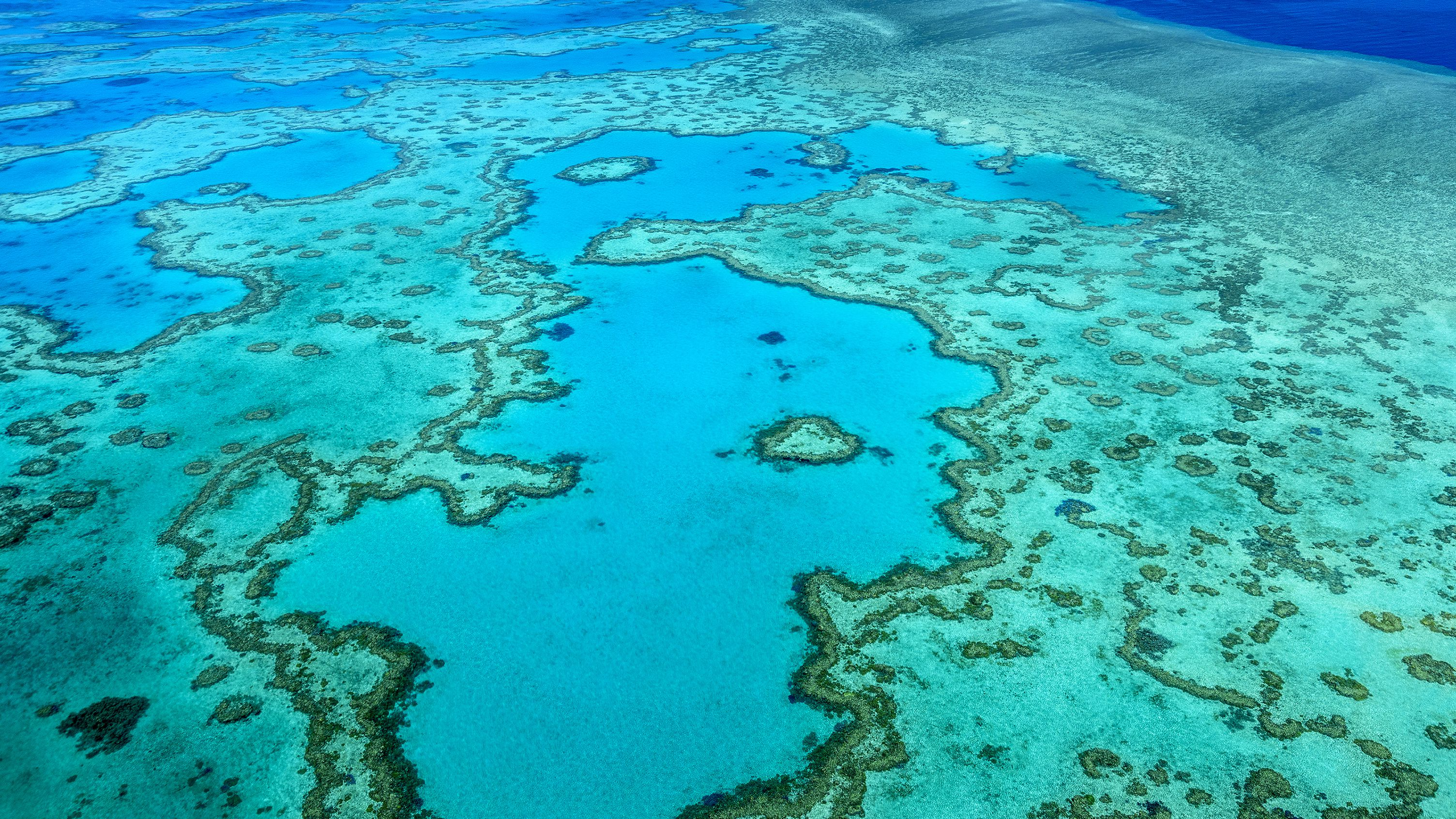 The Great Barrier Reef Has Lost Half Of Its Corals Over The Past 25 Years