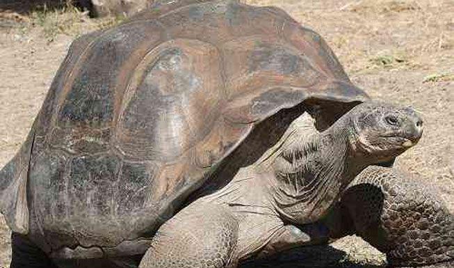 11 Animals That Live the Longest