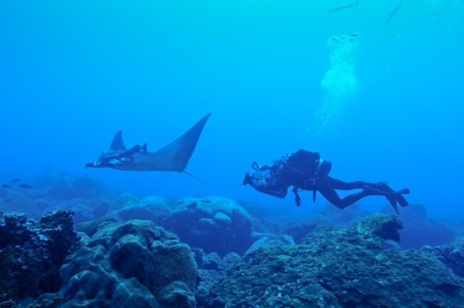 Juvenile manta ray with diver at Flower Garden Banks National Marine Sanctuary