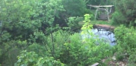 Jardín forestal de permacultura de 20 años en las montañas (Videos)