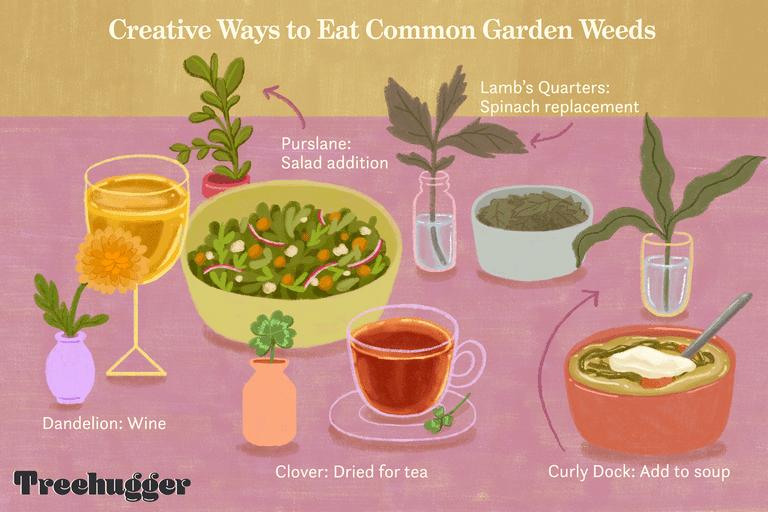 creative ways to eat common garden weeds illustration