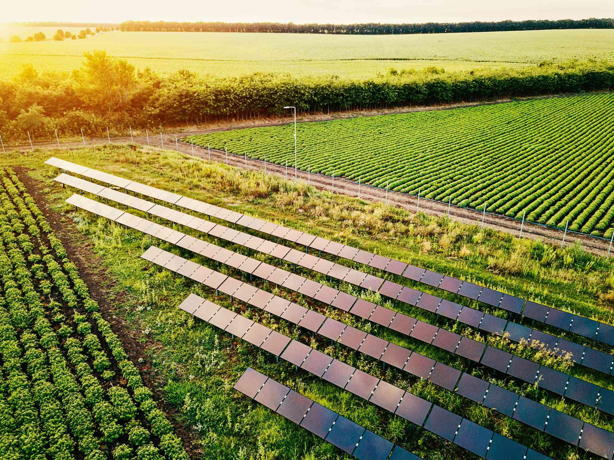 Solar power supply for the farm