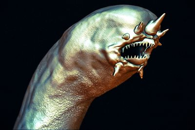 An isolated image of a Hydrothermal worm.