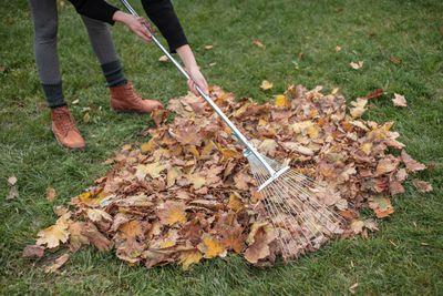 woman rakes leaves outside