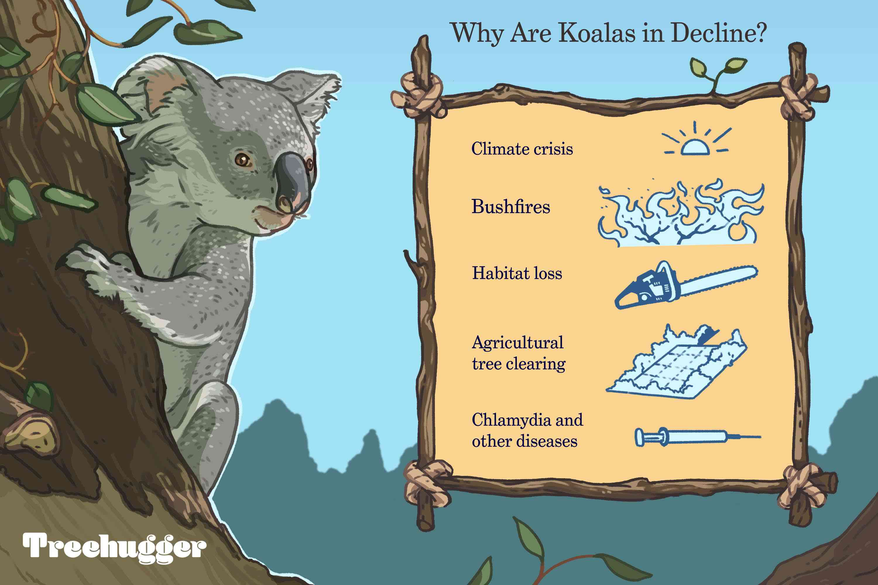 Why are koalas in decline illustrated gif