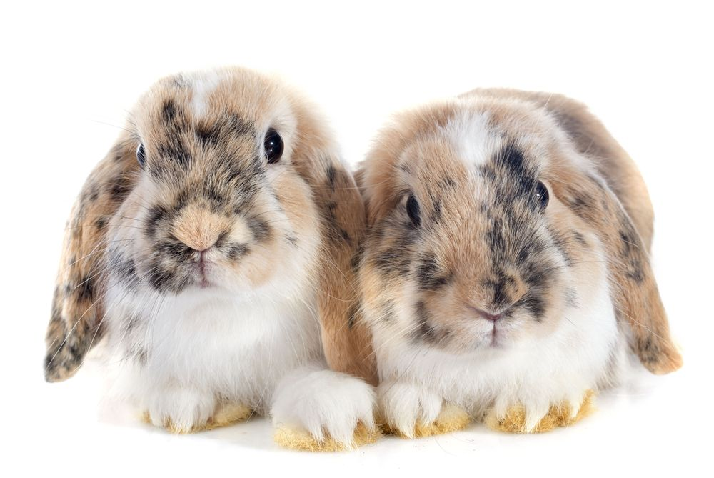 9 Bunny Breeds That Are Too Cute For Words