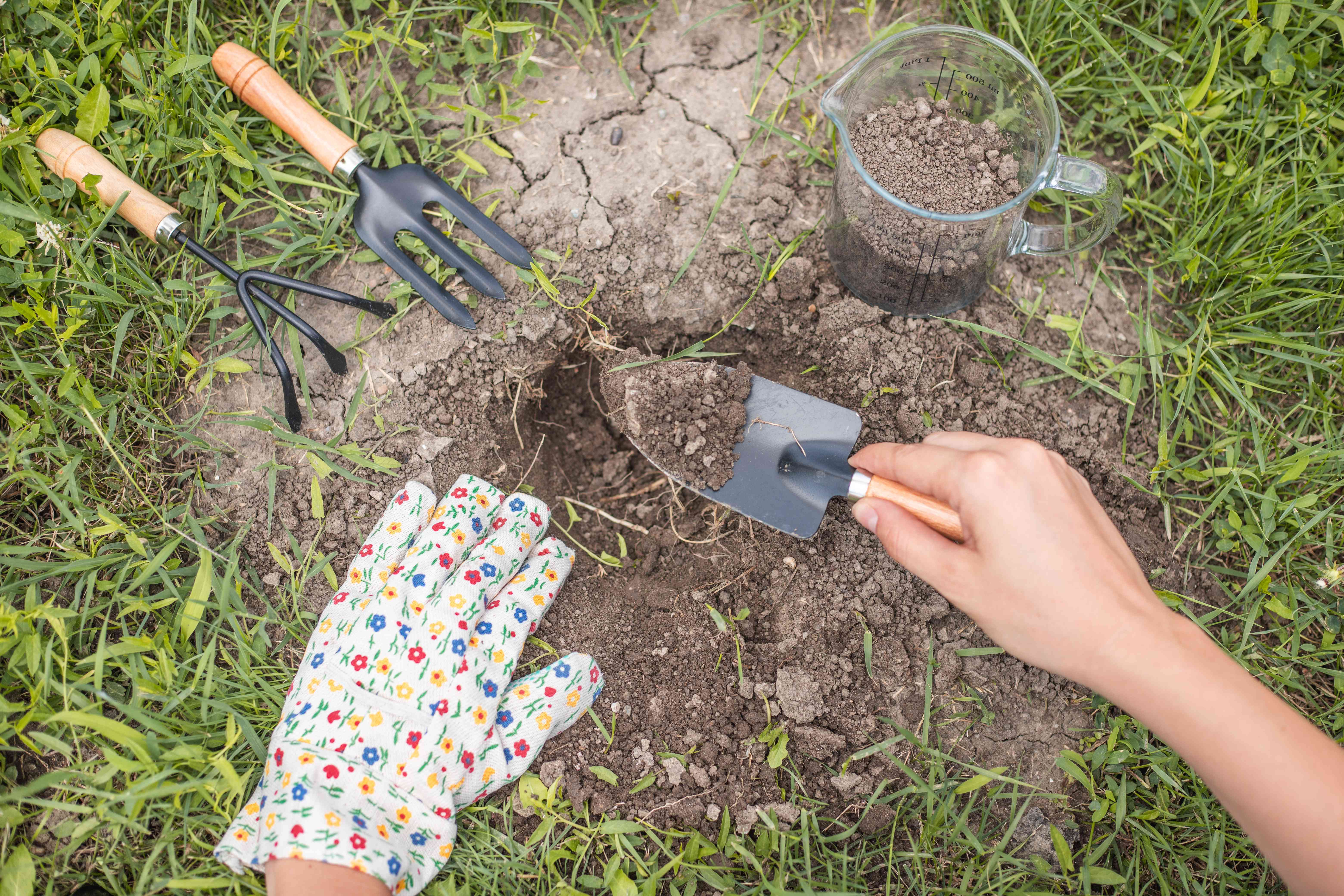 hand wearing gardening gloves dig into soil with trowel to test soil pH
