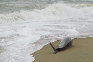dolphin on beach photo.