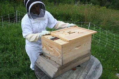 Beekeeper opening the beehive