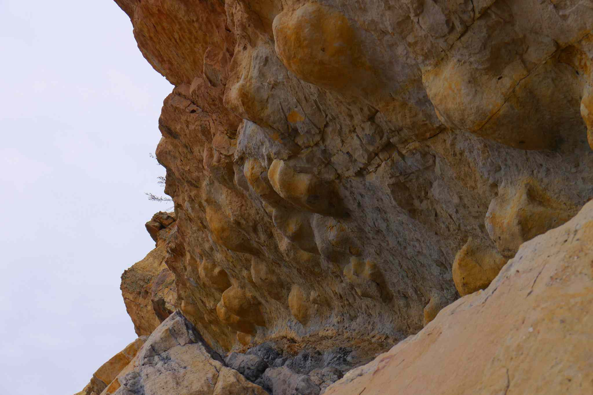 Fossilized dinosaur tracks extruding from a rocky cliff