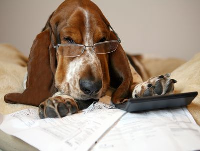 The Dog Days of Tax Filing
