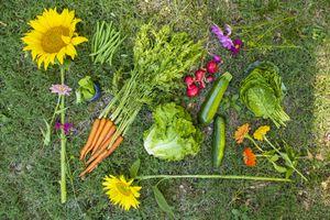 radish lettuce sunflowers carrots on grass