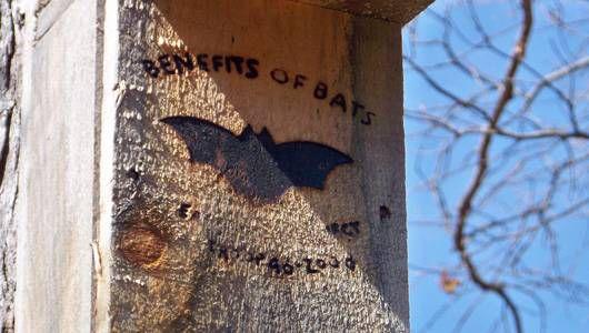 ¿Por qué en el mundo querría atraer murciélagos a mi patio trasero?