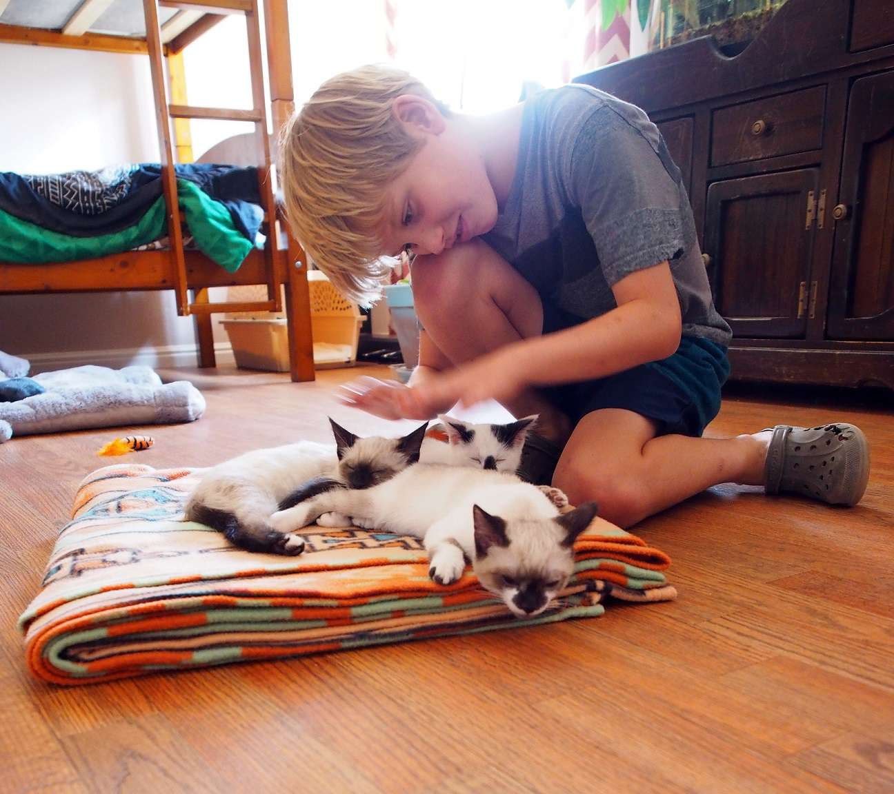 Boy plays with kittens.