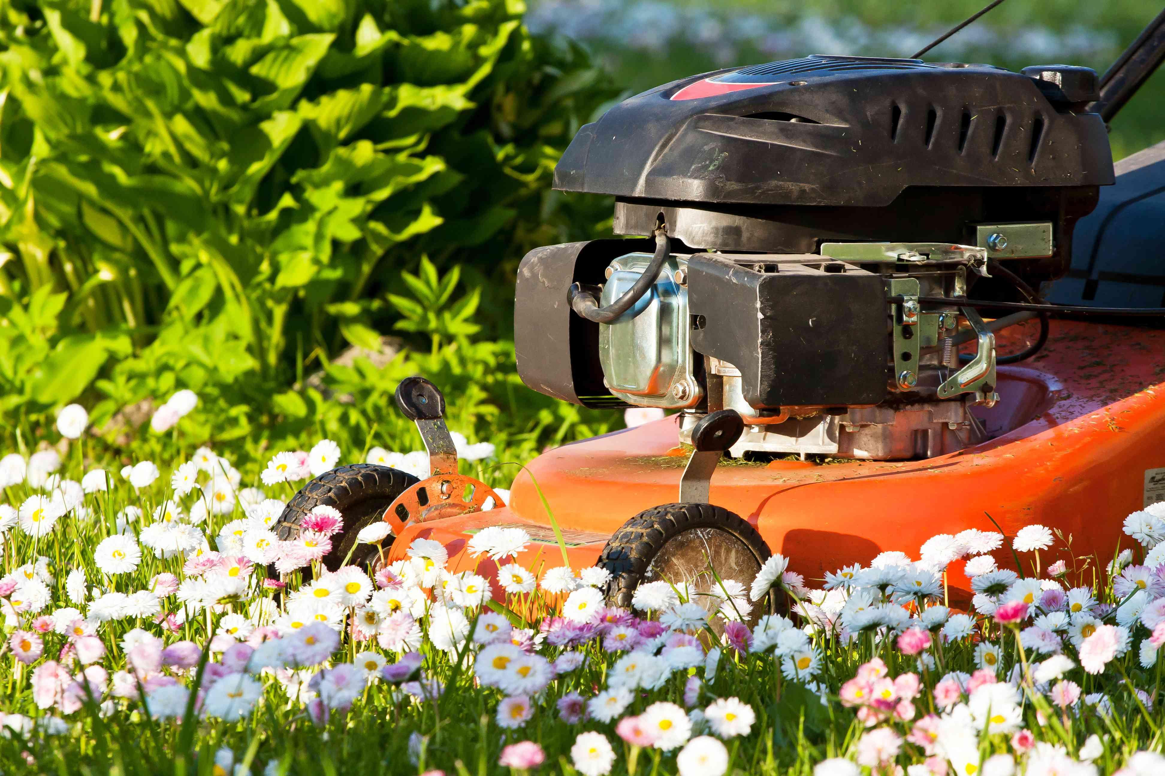 lawnmower cutting flowers