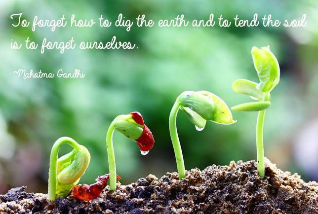 To forget how to dig the earth and to tend the soil is to forget ourselves Mahatma Gandhi