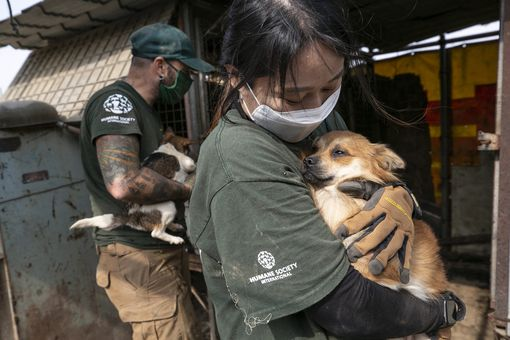The HSI Animal Rescue Team rescues Baker at a dog meat farm in Haemi, South Korea.