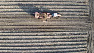 Top down Aerial view of a farmer harvesting potatoes. He is using big agricultural equipment for it.