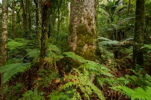 forest floor filled with green ferns and bottoms of tree trunks