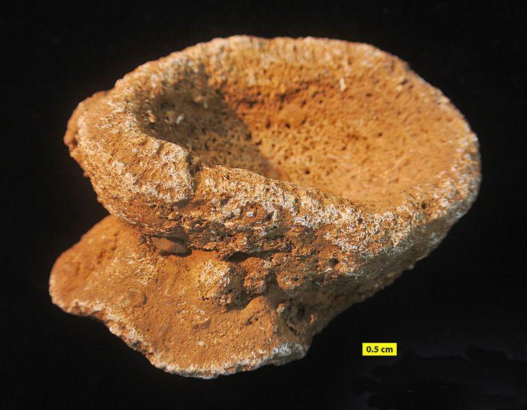 ancient sponge