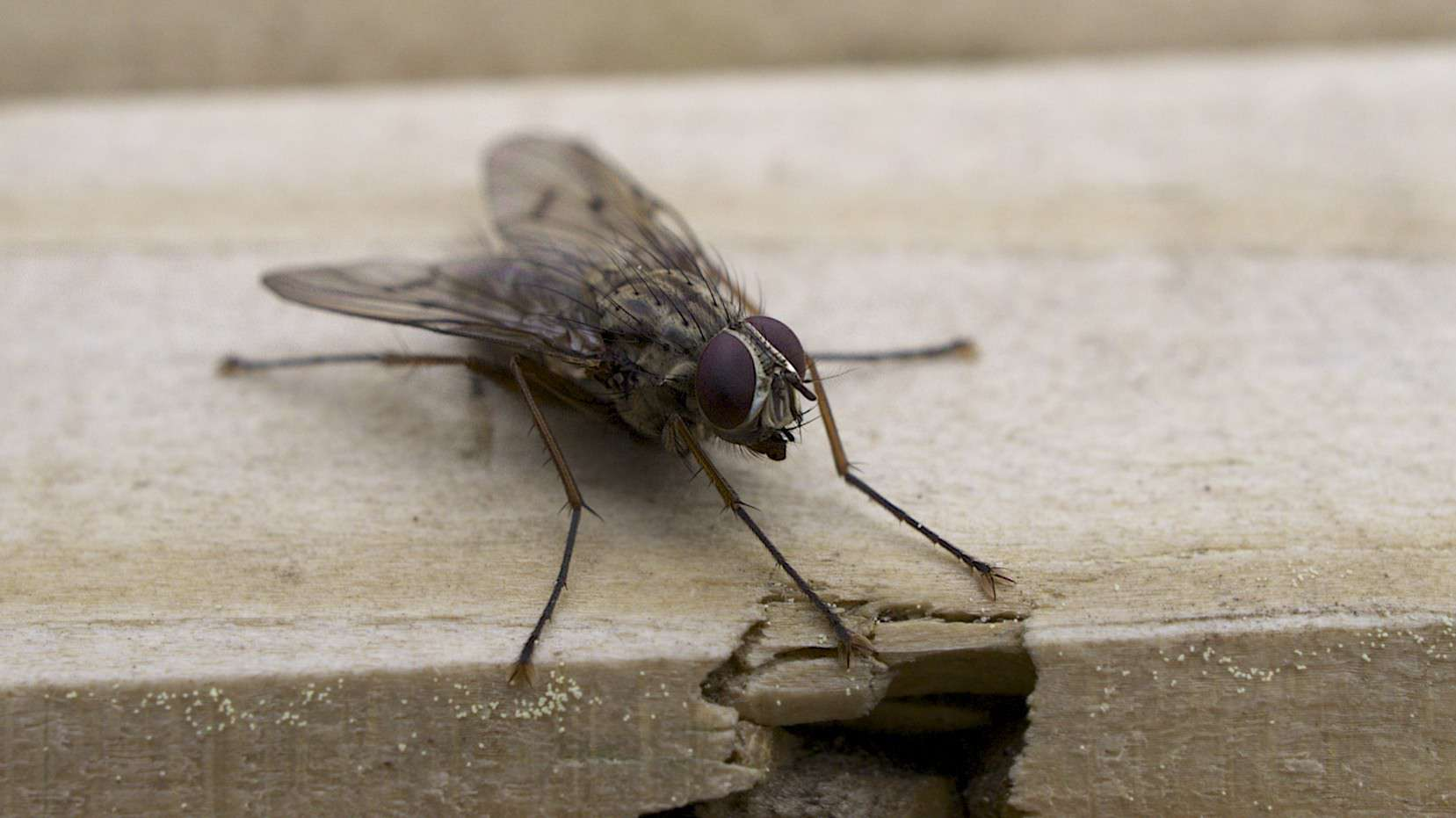 There are plenty of ways to deal with a common housefly.