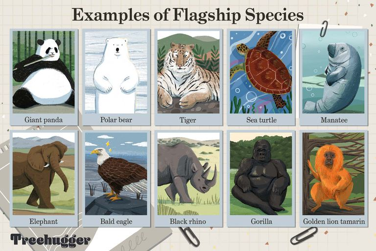 examples of flagship species illustration