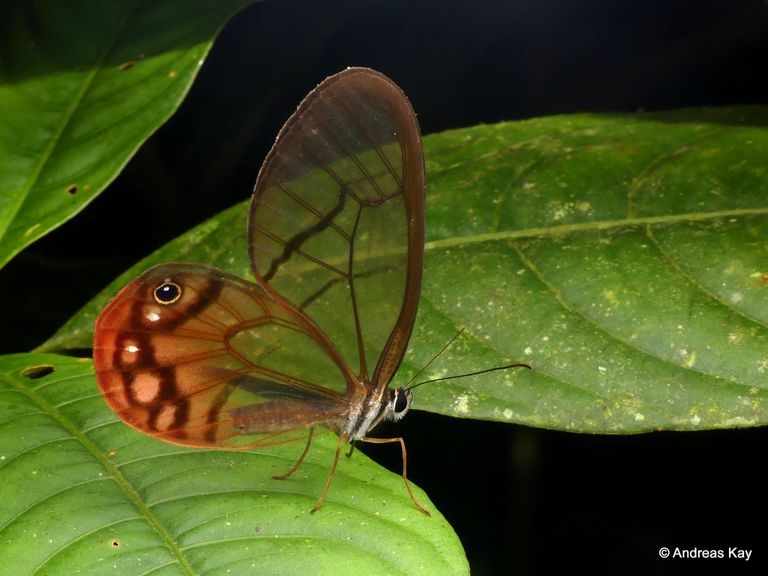 Close up of a butterfly sitting on leaves