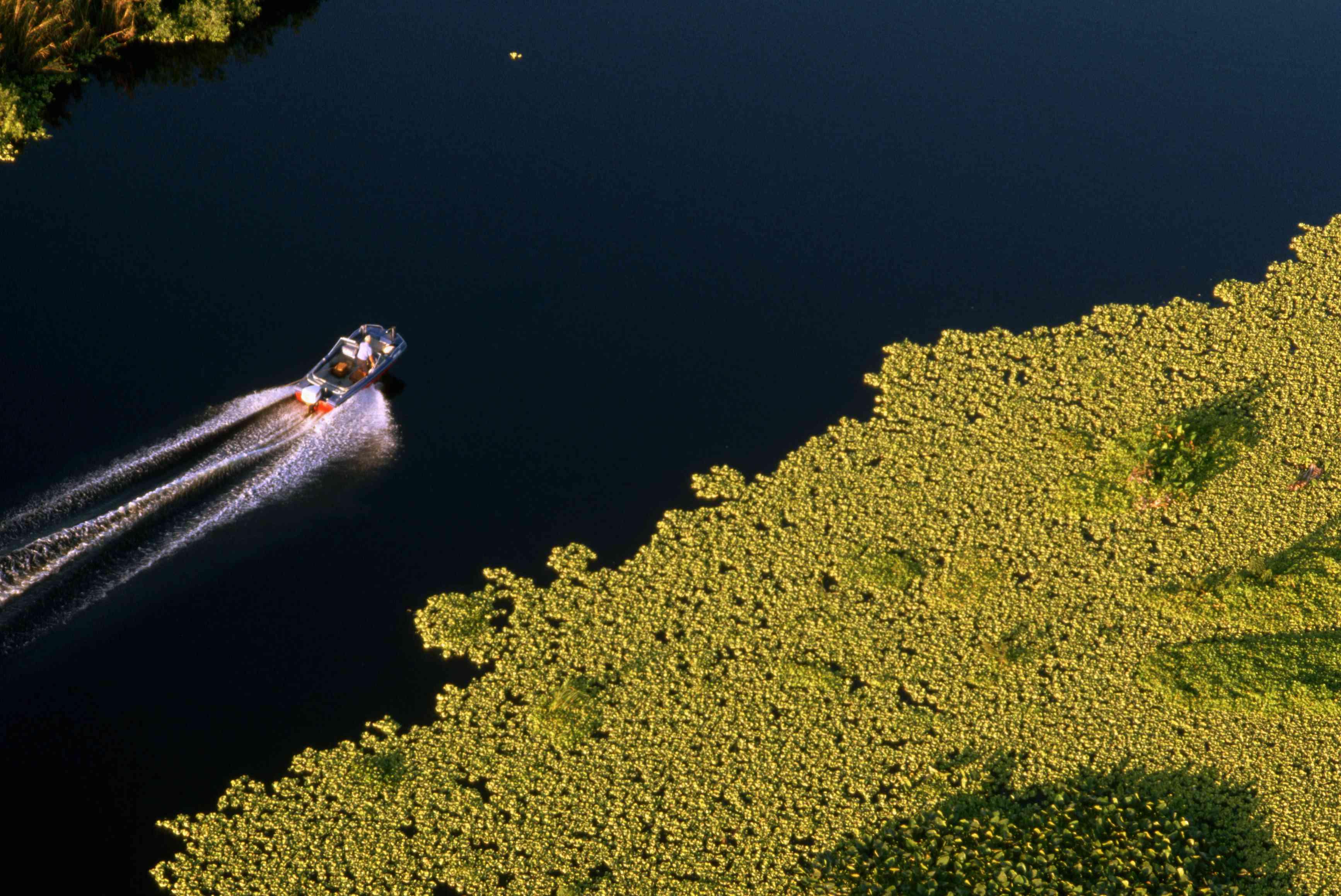 Overview of boat and vegetation on Lake Okeechobee
