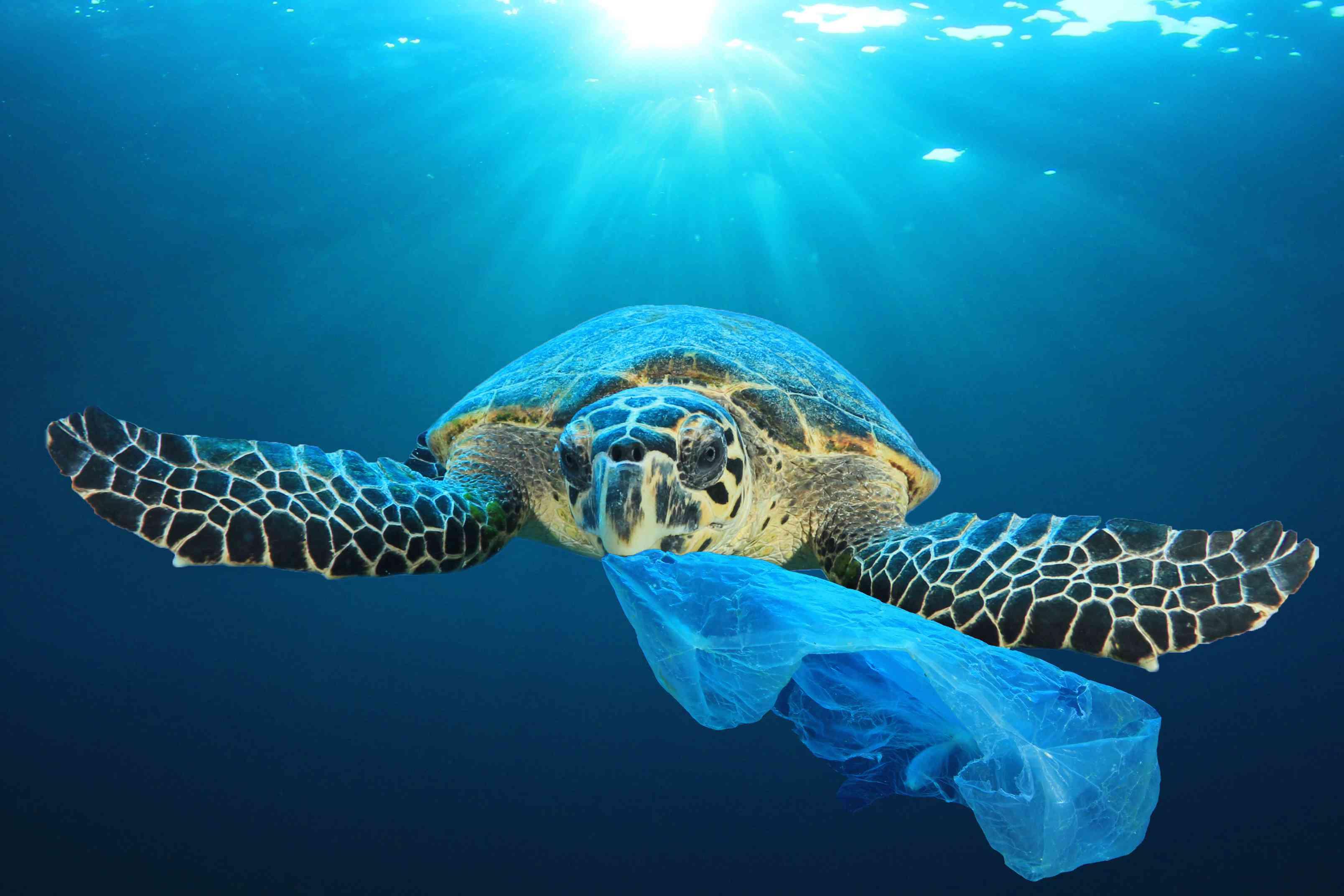Sea turtles often mistake plastic for food.