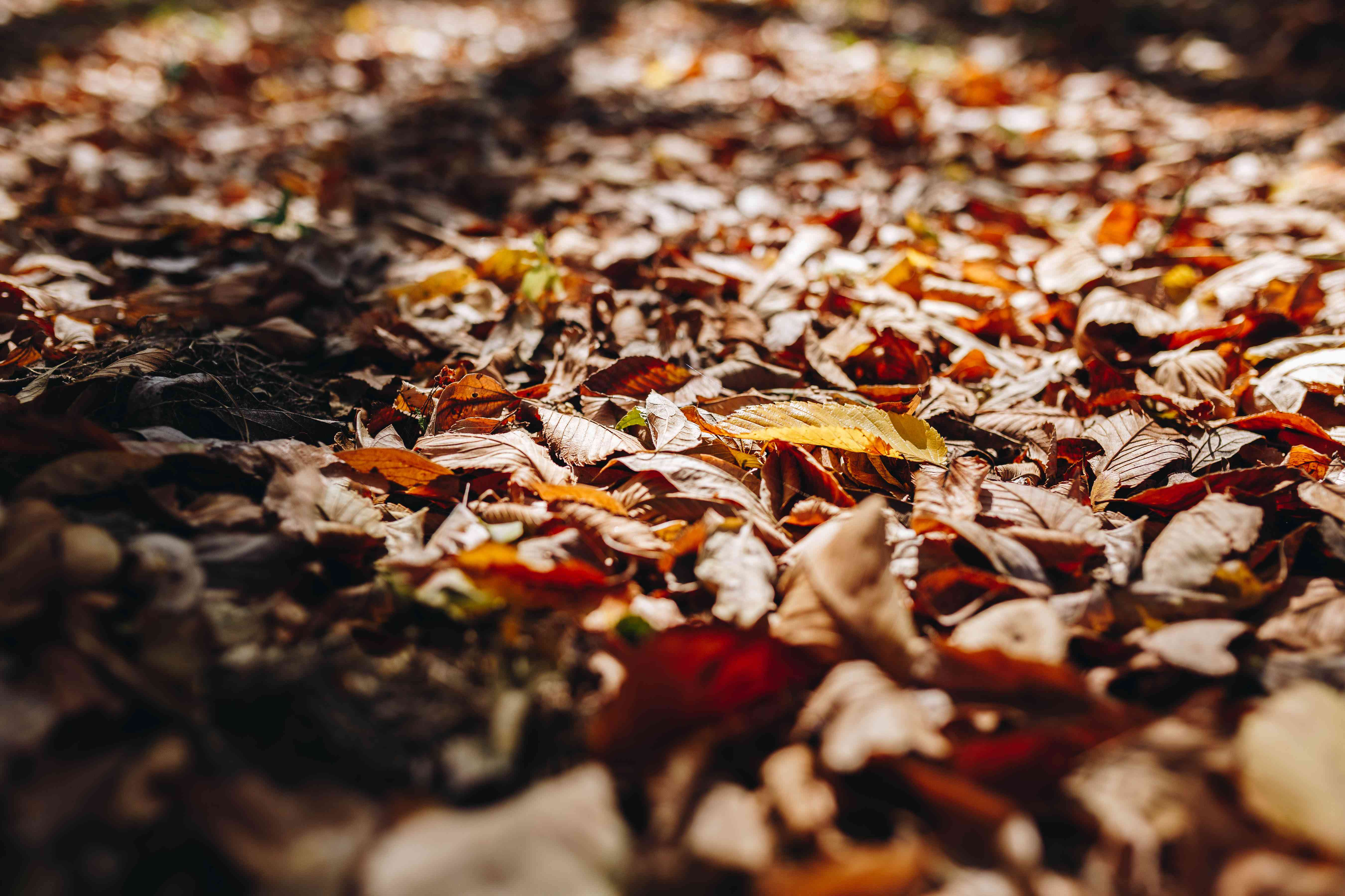 piles of autumn leaves on ground